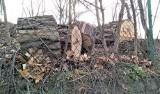Kolejna wycinka drzew w centrum  Zielonej Góry. Tym razem pocięte pnie odkryliśmy na skarpie przy ul. Lipowej