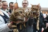 Dzień kota we Wrocławiu. Gigantyczna kolejka w Pasażu Grunwaldzkim (ZDJĘCIA)