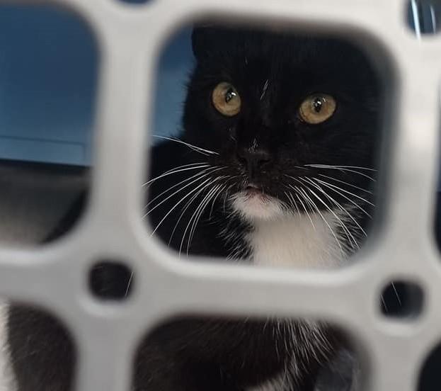 """Wczoraj (5.10.2021 r.) około godziny 16 Stowarzyszenie """"Bezdomny Kundelek"""" w Miastku zostało zaalarmowane o porzuceniu kota na stacji paliw w Węgorzynku. Szybko okazało się, że zdarzenie zostało nagrane przez kamerę monitoringu."""