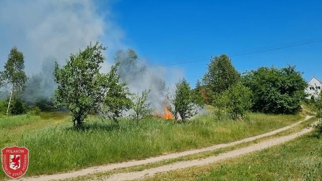 Pożar traw i gałęzi