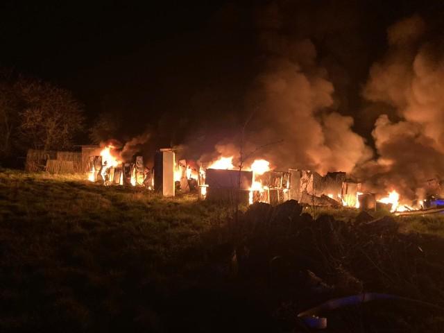 Około czterech godzin strażacy walczyli z dużym pożarem w miejscowości Budzigniew (powiat sulęciński). Płonęło kilkaset pralek i lodówek, zgromadzonych na jednej z posesji. Strażacy musieli bronić przed ogniem pobliskiego budynku mieszkalnego. Zgłoszenie o pożarze strażacy odebrali około godziny 22.15. - Paliły się składowane na posesji sprzęty AGD, około 300 sztuk lodówek i pralek. Sytuacja była poważna, gdyż zaczął palić się również budynek mieszkalny. Właściwe działania ratowników pozwoliły na szybkie opanowanie pożaru i uratowanie budynku mieszkalnego - mówi bryg. Krzysztof Konopko, dowódca Jednostki Ratowniczo-Gaśniczej w Sulęcinie. W budynku mieszkalnym w wyniku wysokiej temperatury spalił się styropian, którym był ocieplony. Nadpaleniu uległa też część więźby dachowej. W zdarzeniu nie było osób poszkodowanych, a straty materialne ograniczono do minimum. W akcji udział brało osiem zastępów Państwowej i Ochotniczej Straży Pożarnej. Rozpoczęte o godz. 22:15 działania zakończono przed godziną 2:00.Wideo: Sulęcin. Pożar domu w centrum miasta