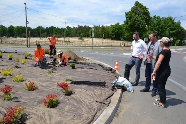 Uczennice  Technikum Architektury Krajobrazu sadzą ozdobne rośliny na rondzie w Pysznicy