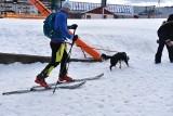 Nowy sport w górach? Połącznie narciarstwa i psich zaprzęgów [ZDJĘCIA]