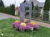 Pomniki, krzyże i urząd. Chryzantemy przyozdobiły ważne miejsca w Łomży i okolicach
