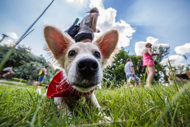 Spacery z psami są coraz bardziej popularne