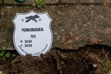 Zambrów. Dwie osoby zatrzymane w związku ze śmiercią noworodka, którego ciało odkryto w sortowni odpadów w Czerwonym Borze [24.05.2020]