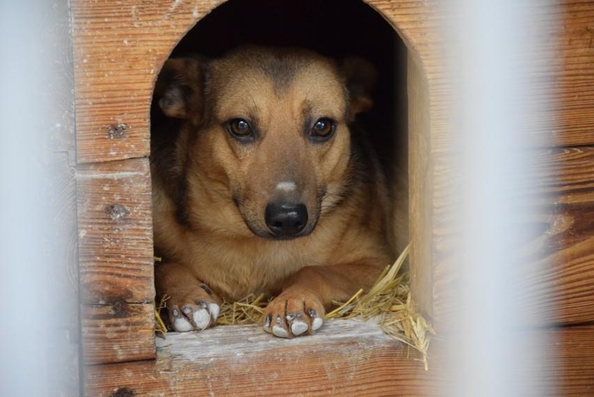 Oto Wojak, który wciąż czeka na odpowiedzialny dom.