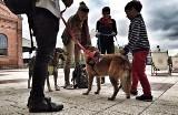 Silesia City Center w Katowicach zezwala na wprowadzanie psów do galerii. Ale są warunki