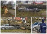 Wichura w Białymstoku. Na Raginisa drzewo przygniotło samochód (zdjęcia)