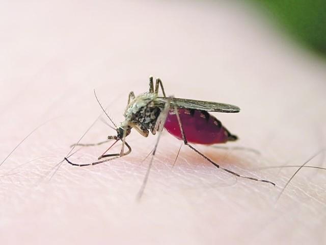 Tegoroczna plaga komarów dała się we znaki Polakom!