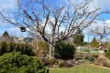 Podglądaliśmy działkowców. Co należy zrobić wczesną wiosną w ogrodzie?