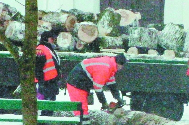 Wczoraj w parku Konstytucji 3 Maja wycięto dwa drzewa, które zagrażały bezpieczeństwu.