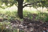 ZIELONA GÓRA: Co skrywa łąka przy ul. Objazdowej? Zobacz! [ZDJĘCIA]