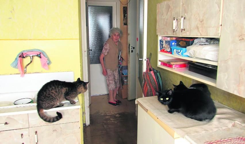 Staruszka Ma Koty Sąsiedzi Skarżą Się Na Smród I Pchły