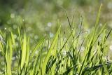 Kalendarz pylenia roślin 2019. Alergiku - sprawdź co pyli teraz. Co pyli w lipcu [LISTA ROŚLIN]