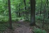 Znaleziono ostre wkręty nabite w kij w lesie. Niefrasobliwa zabawa doprowadzić może do tragedii