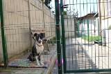 Jest wyrok na opiekuna, który głodził swojego psa. Kropka na szczęście ma się już dobrze [zdjęcia]