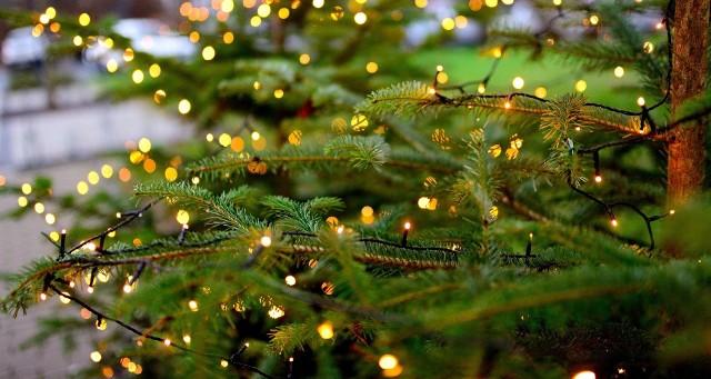 Naturalna choinkaNaturalne choinki mają swój urok, zapach, który rozprzestrzenia się po całym domu.