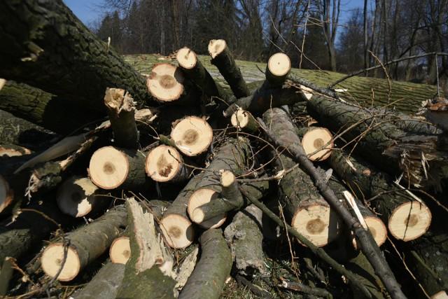 Przy al. Roździeńskiego w Katowicach wyciętych zostanie kilkanaście drzew