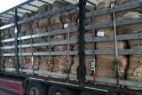 LUBUSKIE Udaremniono przewóz 20 ton suszu tytoniowego. Kierowca został ukarany mandatem karnym wysokości 7,5 tys. zł
