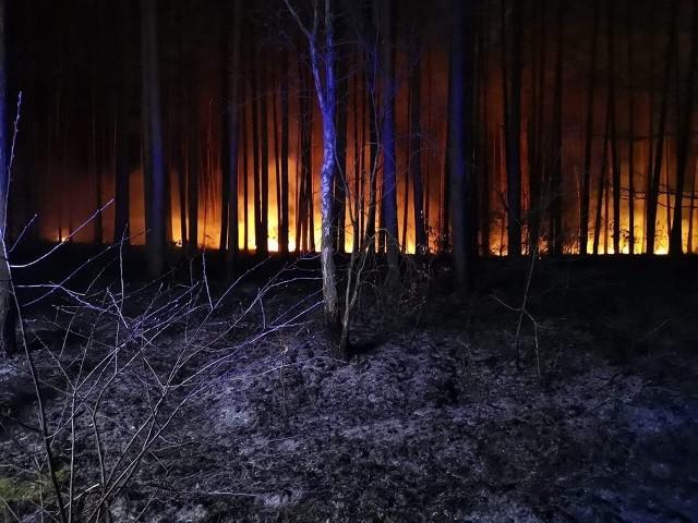 We wtorek wieczorem dwa zastępy OSP Lubiszyn udały się do pożaru lasu w okolicach Lubna. Pożar udało się szybko opanować. Spaleniu uległy około 34 ary lasu. Ogniska pożaru występowały w kilku miejscach. Strażacy podejrzewają, że nie był to przypadek. W akcji wzięły udział także OSP Lubno oraz Straż Leśna. Zobaczcie zdjęcia z pożaru.