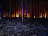 Spaliły się 34 ary lasu w okolicach Lubna. Strażacy podejrzewają, że to nie był przypadek...