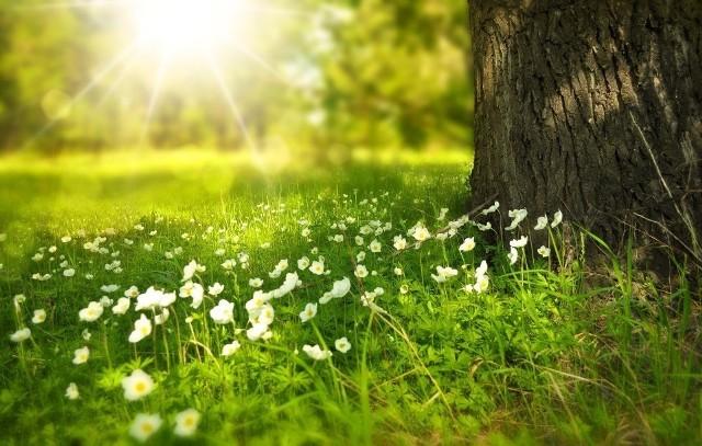Wiosna 2020. Kiedy pierwszy dzień wiosny 2020? Jak będzie pogoda? Kiedy będzie ciepło? 16.03.20
