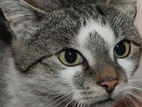 W Skwierzynie ruszyła sterylizacja kotek i suk.