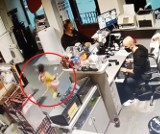 5 latka i mężczyzna okradli sklep przy Piotrkowskiej! Zuchwała kradzież w sklepie muzycznym w Łodzi. Mężczyzna i dziecko ukradli instrument