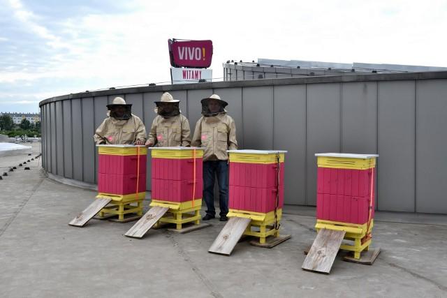 200 tysięcy pszczół zamieszkało w pasiece złożonej z czterech uli na dachu Centrum Handlowego VIVO!