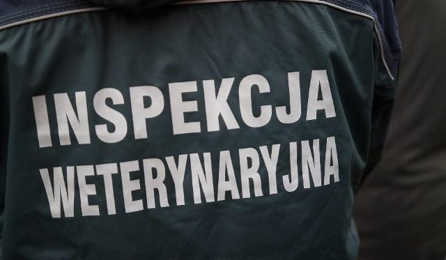 Pracownicy Inspekcji Weterynarii przyszli do pracy ubrani na czarno