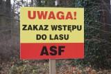 Zakaz wstępu do lasów w okolicach Mieszkowic i Boleszkowic. Planowane polowania. Kolejne przypadki ASF w woj. zachodniopmorskim