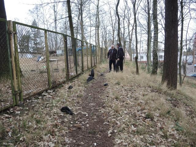 W pobliżu ratusza w Miastku w poniedziałek 28 marca znaleziono kilkadziesiąt martwych i konających kawek
