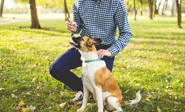 Zobacz, które parki i zieleńce w Poznaniu mają w regulaminie zakaz wprowadzania psów ---->