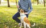 Do tych parków w Poznaniu nie wolno wchodzić z psem. Czy zakazy są zgodne z prawem?