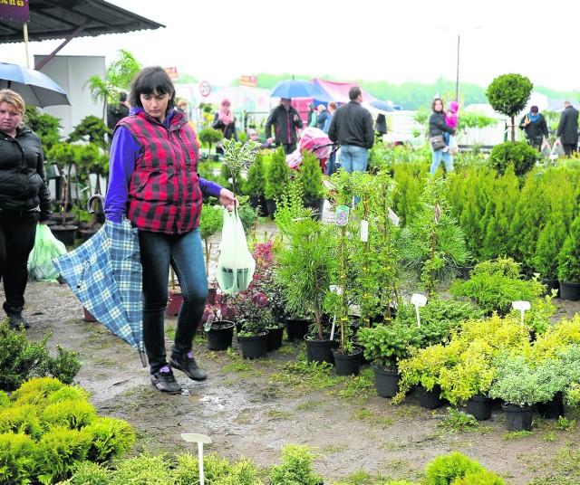 Warto przyjechać w weekend do Szepietowa - znajdziemy tutaj największy w regionie wybór roślin ogrodowych (na zdjęciu ubiegłoroczne Wiosenne Targi Ogrodnicze)