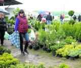 Już w weekend Wiosenne Targi Ogrodnicze w Szepietowie