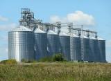 Ceny pszenicy, jęczmienia, pszenżyta. Tyle płacą w maju 2020 za zboża