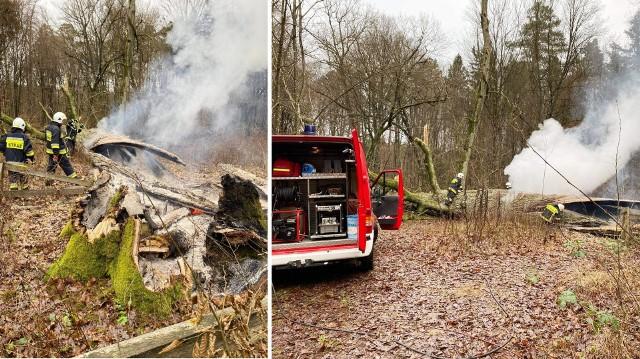 Po dojeździe strażacy z OSP w Lidzbarku zastali powalony pomnik przyrody w trakcie spalania