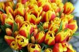 Dzień Matki 2018. Życzenia na Dzień Matki: Najładniejsze życzenia dla mam [WIERSZYKI,RYMOWANKI,SMS-Y NA DZIEŃ MATKI]
