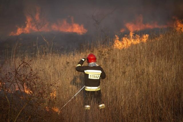 Wypalanie traw nie użyźnia gleby, za to zanieczyszcza powietrze i niszczy rośliny. Co roku z tego powodu wybucha kilkaset pożarów