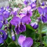 Kolory wiosny. Szukaliśmy ich w ogrodach, na łąkach, w lesie, parku, sadzie