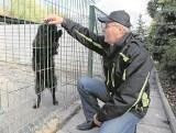 Ul. Dolistowska. Schronisko dla zwierząt to nie więzienie. Spór o wolność psów