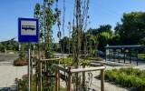Drzewa usychają przy Gdańskiej w bydgoskim Myślęcinku. A to miała być oaza zieleni