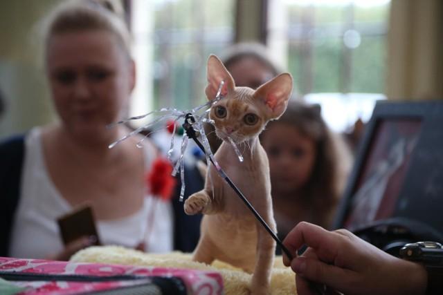 Wystawa Kotów we Wroclawiu