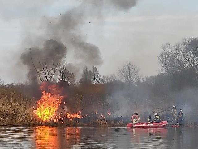 Pożar na terenie Rezerwatu Przyrody Jeziorsko. Strażacy walczą z ogniem już kilka godzin.