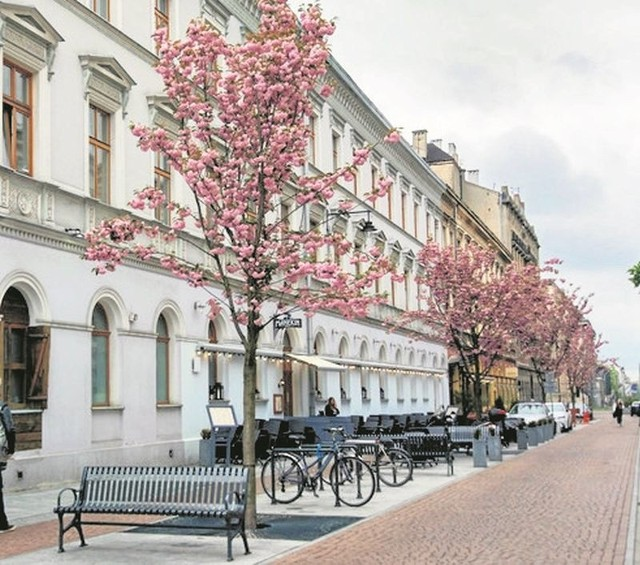 Na podwórcu ul. 6 Sierpnia rośnie pięć japońskich wiśni.