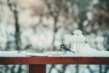 Uwaga! Nadal będzie mroźno i posypie śnieg. Jaka pogoda będzie w Wielkopolsce do końca tygodnia?