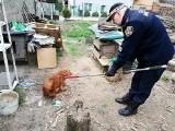 Porzucone psy w Gdyni. Zwierzęta przez około dwa miesiące przebywały na posesji bez wody i jedzenia [zdjęcia]