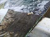 """Dziwna substancja w Zatoce Puckiej. Zamiast ryb w sieciach pojawił się... śluz. """"Rybacy czegoś takiego nie widzieli"""""""